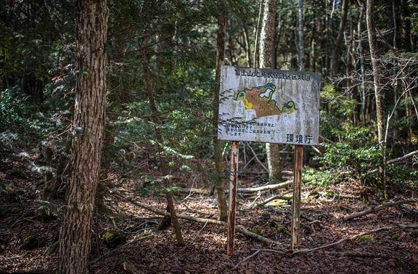 Ngang qua rừng Aokigahara – khu rừng tự sát ở Nhật Bản